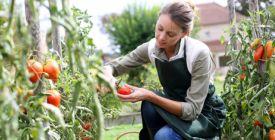 Chcete mít krásnou a zdravou úrodu? Připravte si domácí hnojiva a postřiky