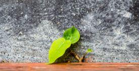 První umělé biosolární listy zvládnou vyčistit vzduch jako 100 stromů