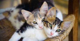 Zařiďte si byt tak, aby návštěvy nepoznaly, že máte kočku