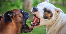 Co dělat, když vašeho psa začne ohrožovat jiný pes?