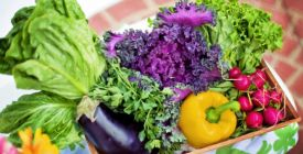 Jak ochránit vysazenou zeleninu před škůdci?