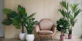 Chcete se těšit z nádherných rostlin? Zkuste hnojivo z domácího odpadu